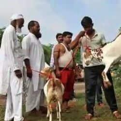 बकरीद की तैयारी, कुर्बानी को ऑनलाइन के साथ डोर टू डोर भी बिक रहे बकरे