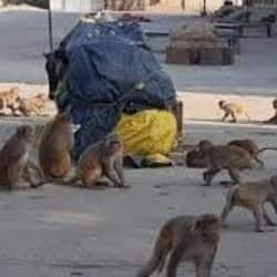 रेलवे स्टेशन पर बंदरो का हमला लगातार बढ़ता जा रहा है.