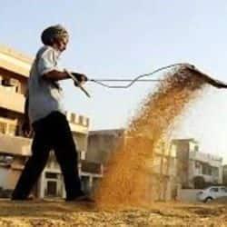 बिहार के चार जिलों में धान की खरीददारी शुरु हो चुकी है.(फाइल फोटो)