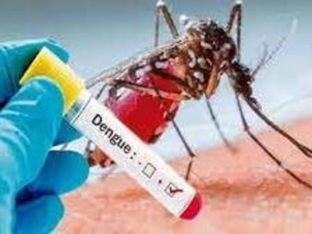 After Firozabad Up Agra Health Department found 16 dengue and viral fever case - फिरोजाबाद के बाद यूपी के आगरा में बढ़ा डेंगू का प्रकोप, 16 मामलों की पुष्टि