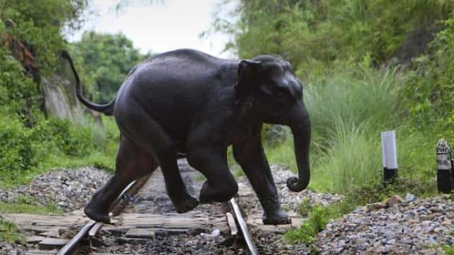 Sound of bees to ward off elephants from rly tracks in Bengal