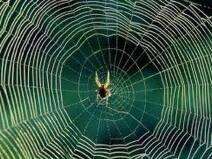 मकड़ी का जाल