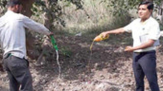 Action, terrain, mango, drink, sample