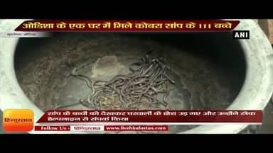 Odisha News II 140 snake hatchlings found in house in Odisha's Bhadrak