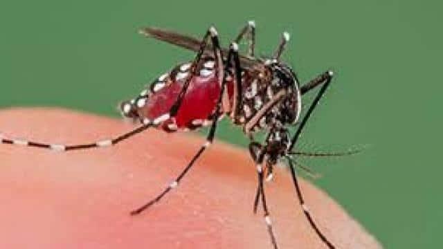फैजाबाद : बच्चों ने सीखा डेंगू व जेई से बचाव के गुर