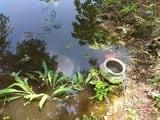 बर्तन निकालने गई बालिका तालाब में डूबी, मौत