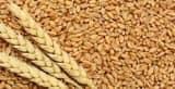 मोटे अनाज की सरकारी खरीद से कृषि विविधिकरण को मिलेगा बढ़ावा