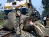 Elephants on railway tracks (Symbolic Image)