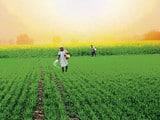 पीएम की अध्यक्षता में मंत्रिमंडल की बैठक में कृषि मंत्रालय के इस आशय के प्रस्ताव को मंजूरी दी गई।
