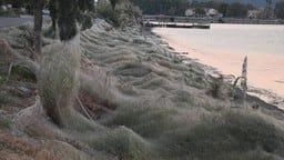 Thousands of spiders have descended on the seaside town CREDIT: GIANNIS GIANNAKOPOULOS
