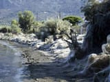 beach at Aitoliko in western Greece are covered in thick spiders webs