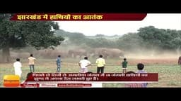 झारखंड में हाथियों का आतंक, जंगली हाथियों के झुंड ने युवक को कुचल कर मार डाला