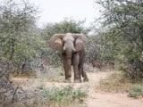 elephant killed woman tourist in zimbabwe