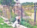 बनमनखी स्थित पार्क में पौधों की देखभाल और सफाईकरते अरुण कुमार पाण्डेय।