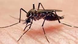 डेंगू का शॉक सिंड्रोम मरीजों की जान पर पड़ रहा भारी, जानें क्या है ये बला