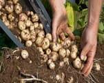 उद्यान विभाग की पौधशाला से मिलेगा आधारीय बीज