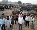 जोगराजपुर सेंटर पर गन्ना तुलवाने को कई दिनों से डेरा डाले हैं किसान