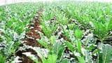 कृषि उत्पाद का 14 फीसदी हिस्सा नुकसान कर देते हैं नाशी जीव