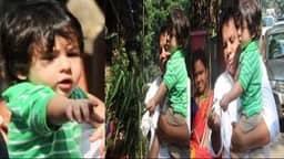 Video: गायों को चारा खिलाते हुए काफी खुश दिखे सैफ-करीना के छोटे नवाब तैमूर अली खान