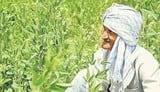 एक ही खेत पर 12 किसानों का दावा