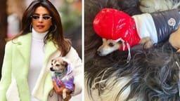 Priyanka Chopra, 36 Lakhs jackets, Dog, Diana, Priyanka Chopra Doggy, d