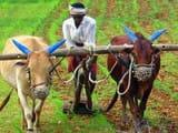 किसान (Symbolic Image)