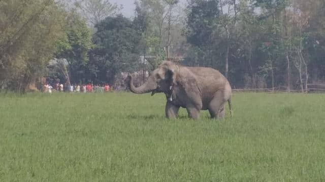 Wild elephant killed three people in border area of Supaul