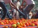 tomatoes holi