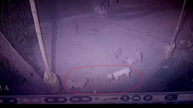 loyalty of 4 pet dogs in bhagalpur  for save owner and family life from snake they lost his life