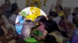 रोती बिलखती महिला के आंसू पोंछने पहुंचा लंगूर, देखें Video