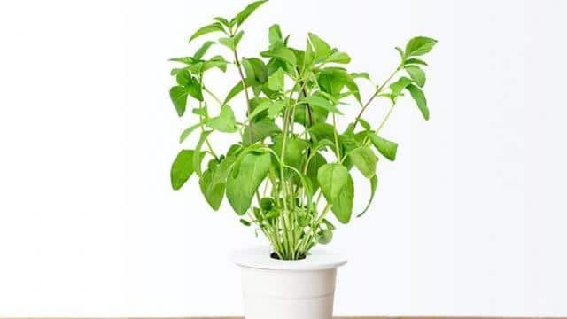 photo- click   grow