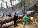 अल्मोड़ा-रानीखेत हाइवे पर जलता हुआ पेड़ गिरा, लगा जाम