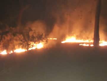 वीटीआर में आग से सात एकड़ जंगल राख