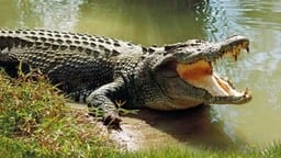 symbolic image crocodile  photo- cbc ca