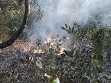 वीटीआर में अगलगी से 20 एकड़ जंगल राख