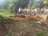 आम के हरे पेड़ कटान की सूचना पर डीएफओ ने मारा छापा
