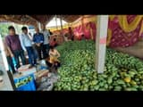 famous jardalu mango of bhagalpur will be sent to president and pm today by vikramshila express