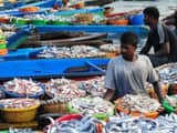 fisherman of bihar will learn the modern technics of fishing from the fishermen of other ststes