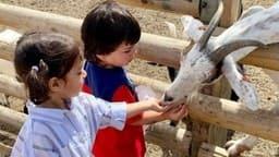 Video: मिट्टी में खेलते, बकरी को खाना खिलाते नजर आए Taimur Ali Khan, रणविजय सिंह की बेटी कायनात भी दिखीं साथ