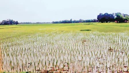 मेघ की मेहरबानी से खेतों में भरा पानी, किसानों के चेहरे खिले