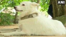 पड़ोस के कुत्ते से 'अवैध संबंध', मालिक ने कुतिया को घर से निकाला