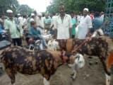 बकरीद की नमाज को लिया ईदगाह का जायजा