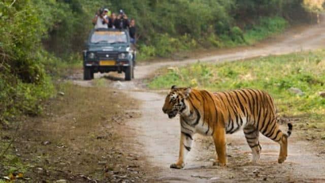 रणथंभोर नेशनल पार्क से 26 बाघ लापता, जावड़ेकर को पत्र भेज हाईलेवल जांच की मांग