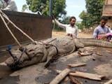 प्रोजेक्टर पर हो रही रामलीला में घुसा मगरमच्छ, भगदड़ मची
