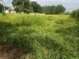 तेज हवा, बारिश से किसानों की धान की फसल तबाह