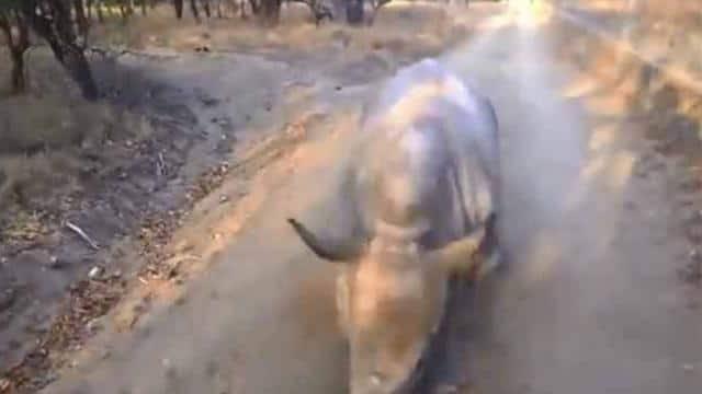VIRAL VIDEO: गेंडे और बकरी का ये वीडियो आपका दिल जीत लेगा