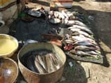 banned thai mangur selling in bareilly increasing risk of fatal cancer in humans