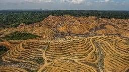 declining natural habitat