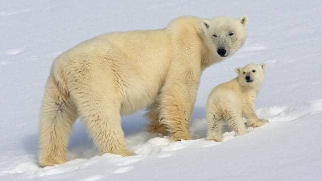 कहां जाएं भालू