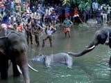 pregnant elephant death case